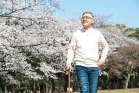 桜並木を散歩するシニア男性