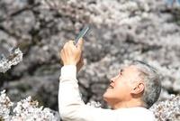 スマートフォンで桜を撮るシニア男性
