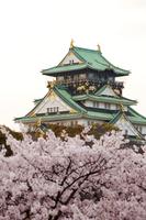 夕日に染まる大阪城と桜