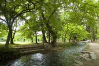 上賀茂神社境内の明神川