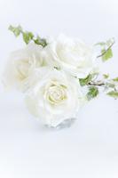 白いバラとアイビー
