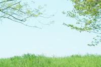 土手と桜の木