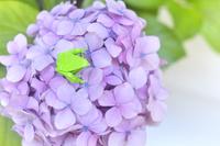 折り紙のカエルとアジサイの花