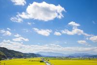 豊岡市の田園風景