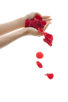 バラの花ビラと女性の手