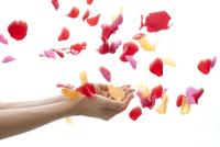 バラの花ビラと女性の手 11031085375| 写真素材・ストックフォト・画像・イラスト素材|アマナイメージズ