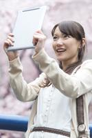 タブレットPCで桜を撮る女性