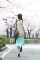 桜並木を歩く女性の後姿