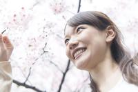 桜の枝に触れる女性
