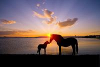 馬の親子シルエット