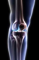 bones of knee