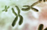 Chromosomes 11037000040| 写真素材・ストックフォト・画像・イラスト素材|アマナイメージズ