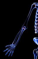 bones of upper limb 11037000171| 写真素材・ストックフォト・画像・イラスト素材|アマナイメージズ