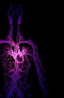 blood vessels of upper body 11037000368| 写真素材・ストックフォト・画像・イラスト素材|アマナイメージズ