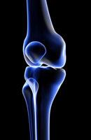 bones of knee 11037001002| 写真素材・ストックフォト・画像・イラスト素材|アマナイメージズ