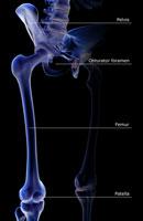 bones of lower limb 11037001467| 写真素材・ストックフォト・画像・イラスト素材|アマナイメージズ