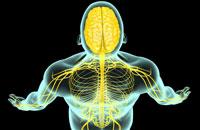 nerves of head and shoulder