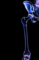 bones of hip and lower limb