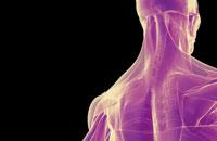 muscles of head and neck 11037002887| 写真素材・ストックフォト・画像・イラスト素材|アマナイメージズ