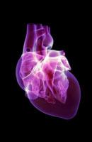 heart 11037002946| 写真素材・ストックフォト・画像・イラスト素材|アマナイメージズ