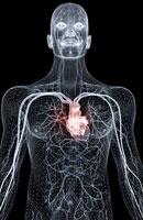 blood vessels of upper body 11037003176| 写真素材・ストックフォト・画像・イラスト素材|アマナイメージズ