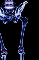 bones of hip and lower limb 11037003874| 写真素材・ストックフォト・画像・イラスト素材|アマナイメージズ