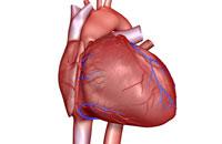 coronary vessels of heart