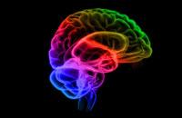 brain 11037004516| 写真素材・ストックフォト・画像・イラスト素材|アマナイメージズ