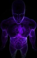 blood vessels of upper body