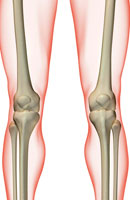 bones of knee 11037004719| 写真素材・ストックフォト・画像・イラスト素材|アマナイメージズ