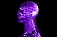 brain and cervical spinal nerves