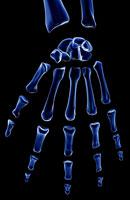 bones of hand 11037005039| 写真素材・ストックフォト・画像・イラスト素材|アマナイメージズ