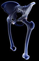 bones of lower limb 11037005484| 写真素材・ストックフォト・画像・イラスト素材|アマナイメージズ