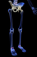 bones of lower body 11037005491| 写真素材・ストックフォト・画像・イラスト素材|アマナイメージズ