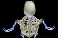 bones of head and shoulder