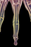 muscles of fingers 11037005867| 写真素材・ストックフォト・画像・イラスト素材|アマナイメージズ