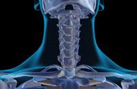 bones of neck