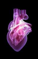 heart 11037006052| 写真素材・ストックフォト・画像・イラスト素材|アマナイメージズ
