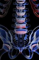 bones of lower back 11037006134| 写真素材・ストックフォト・画像・イラスト素材|アマナイメージズ