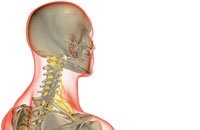 nerves of neck