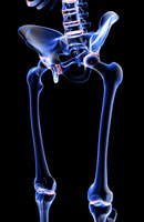 bones of lower limb 11037006388| 写真素材・ストックフォト・画像・イラスト素材|アマナイメージズ