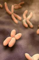 Chromosome 11037006556| 写真素材・ストックフォト・画像・イラスト素材|アマナイメージズ