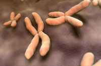 Chromosome 11037006568| 写真素材・ストックフォト・画像・イラスト素材|アマナイメージズ