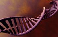 DNA 11037006769| 写真素材・ストックフォト・画像・イラスト素材|アマナイメージズ