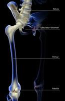 bones of lower limb 11037006965| 写真素材・ストックフォト・画像・イラスト素材|アマナイメージズ