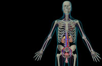 urinary system 11037007380| 写真素材・ストックフォト・画像・イラスト素材|アマナイメージズ
