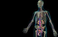 urinary system 11037007585| 写真素材・ストックフォト・画像・イラスト素材|アマナイメージズ