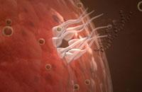 HIV viral DNA