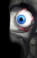 muscles of eye