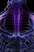 Nerves of upper body